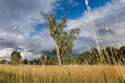 Australischer Busch