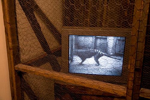 Ein Thylacine im Londoner Zoo