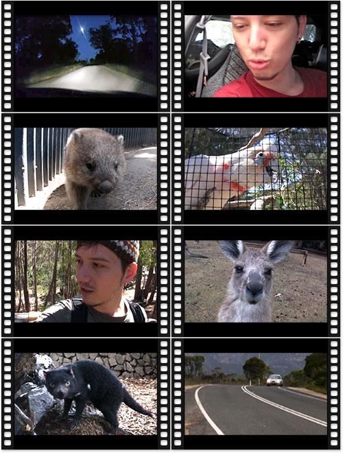 """Videovorschau """"Wildes Leben"""""""