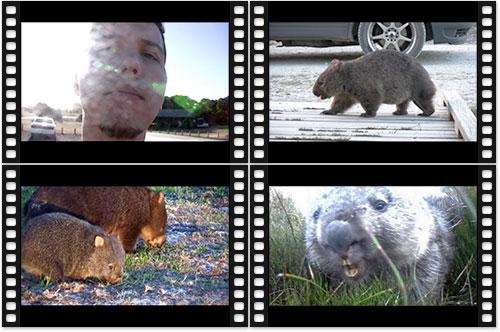 Videovorschau: Wombat Bonus Pack