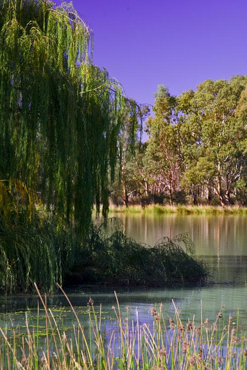 Bäume im Wasser, Renmark