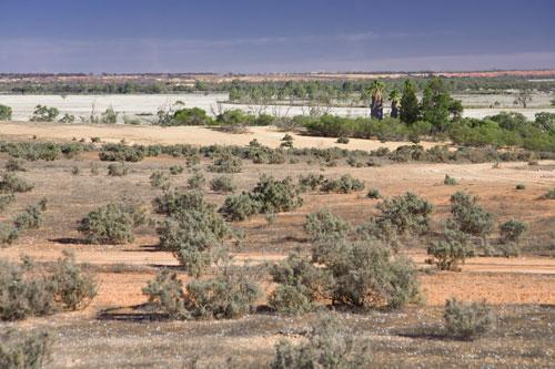 Buschlandschaft, nahe Loxton