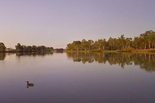 Der Murray River mit Ente. Renmark