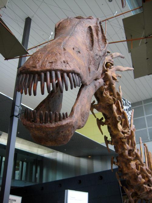 Dinosaurier-Skelett im Museum in Melbourne