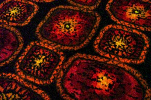 hässlicher Teppichboden