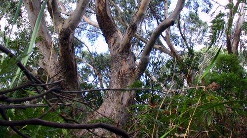 Ein Baum und ein Busch