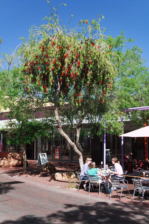 Ein Baum mit leuchtenden Blüten spendet Cafégästen Schatten